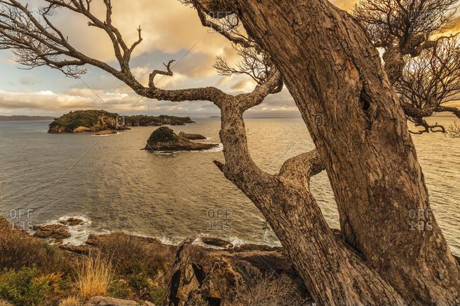 Tepare Point Reserve, Coromandel Peninsula, Waikato, North Island, New Zealand, Pacific