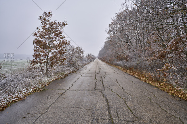 Winter rural road passing through a forest covered by snow in a cloudy winter day