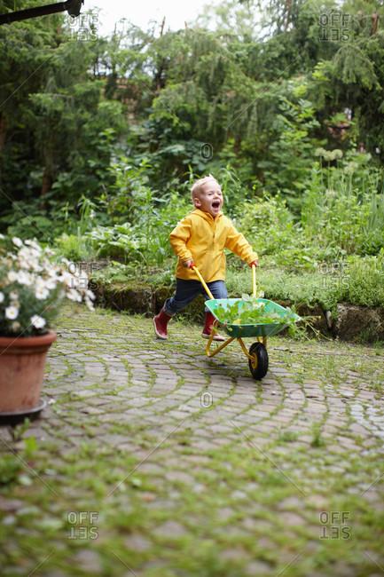Toddler boy with wheelbarrow in backyard