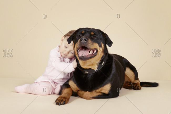 Studio portrait of baby girl resting against large Rottweiler dog