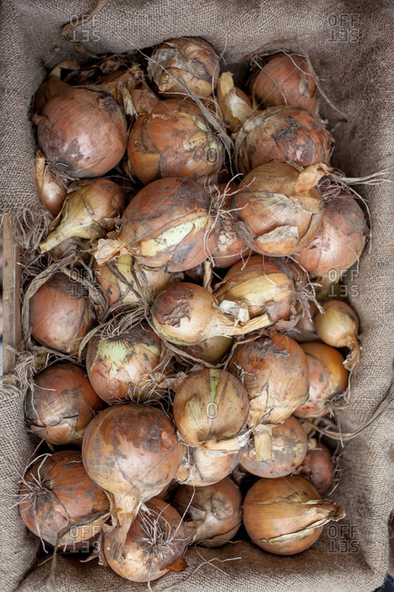 Crate of organic onions, top view