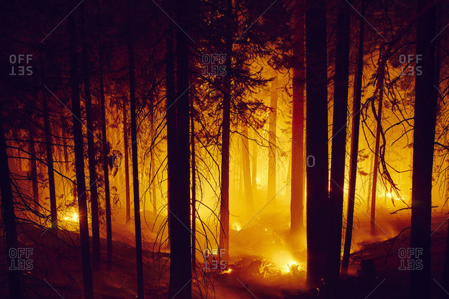 Forest fire, Yosemite National Park, California, USA