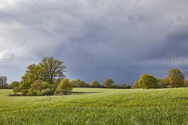 Germany, mecklenburg-west pomerania, landscape, ackersoll