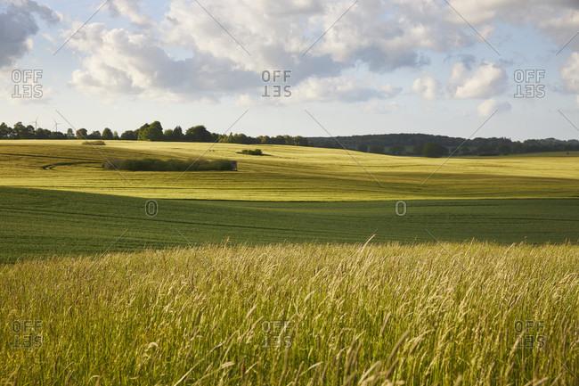 Germany, mecklenburg-west pomerania, landscape, agricultural landscape