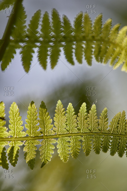 Detailed shot of fern leaves