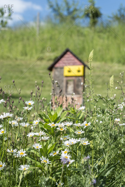 Wild meadow with insect hotel in the background