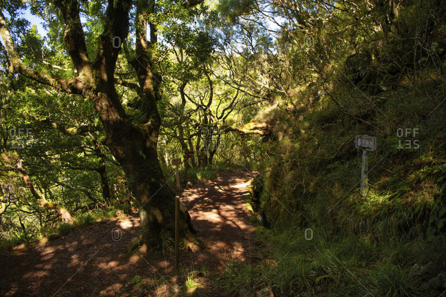 Hiking trail along the levadas das 25 fontes, rabacal nature reserve and unesco world heritage site, madeira, portugal