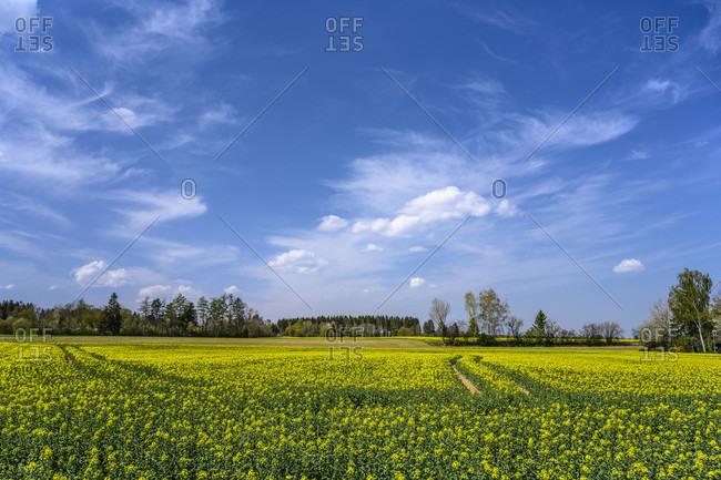 Germany, bavaria, upper bavaria, munich district, oberhaching, deisenhofen district, rapsfeld