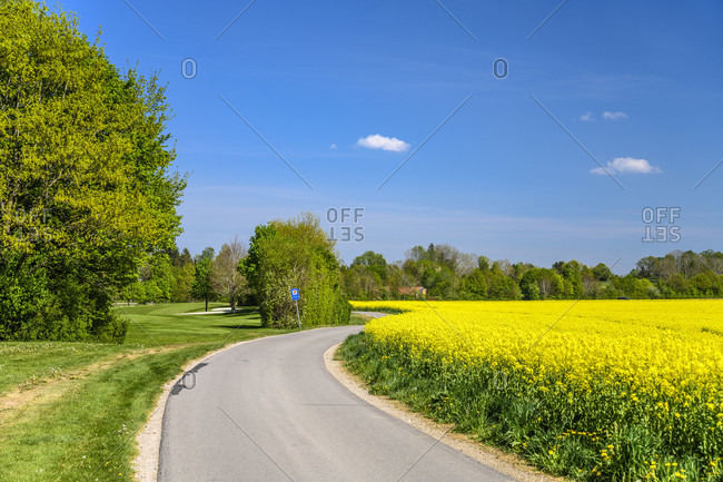 Germany, bavaria, upper bavaria, munich district, strablach-dingharting, deigstetten district, golf course, rape field