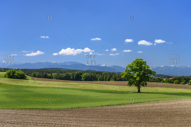 Germany, bavaria, upper bavaria, tiler land, eagling, attenham district, cultural landscape against pre-alps