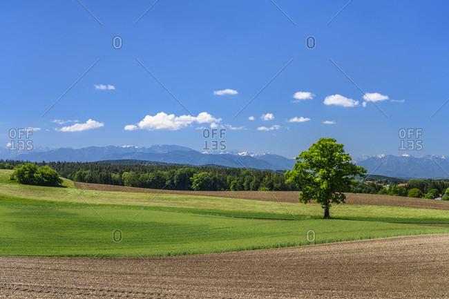 Germany, bavaria, upper bavaria, tiler land, eagling, attenham district, cultural landscape against pre-alps
