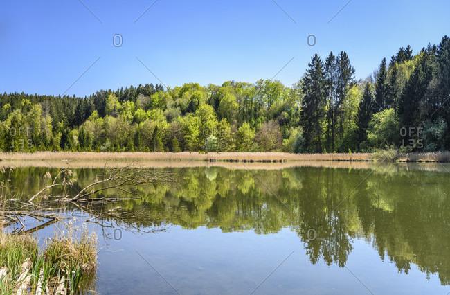 Germany, bavaria, upper bavaria, tiler land, eagling, thanning district, thanninger weiher