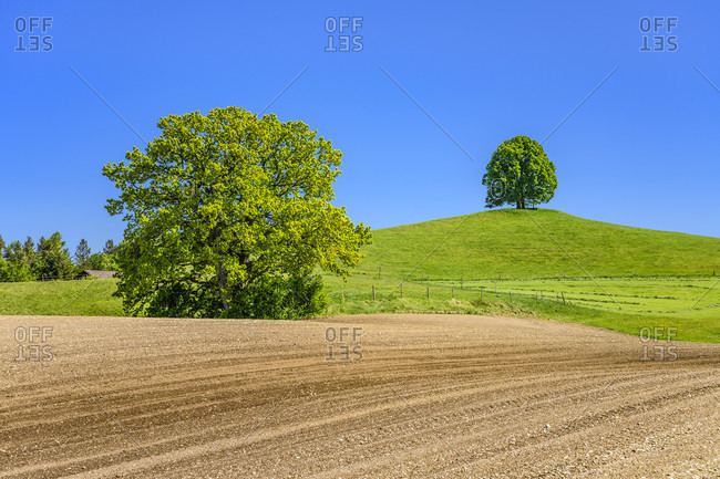 Germany, bavaria, upper bavaria, tiler land, eagling, cultural landscape with oak and linden