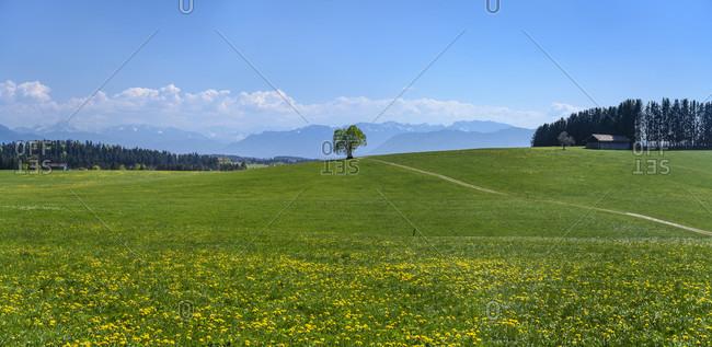 Germany, bavaria, upper bavaria, tiler land, dietramszell, foggenbeuern district, spring landscape against pre-alps