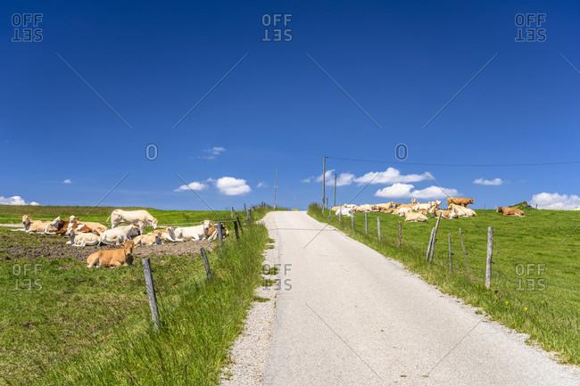 Germany, bavaria, upper bavaria, tiler land, dietramszell, punding district, herd of cows