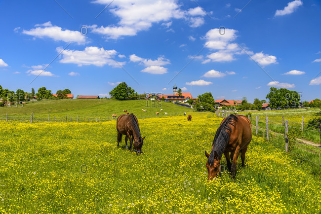 Germany, bavaria, upper bavaria, tiler land, dietramszell, lochen district, spring landscape, paddock and town view with st. magdalena church