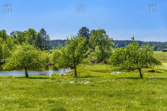 Germany, bavaria, upper bavaria, tiler land, dietramszell, lochen district, spring landscape and pond