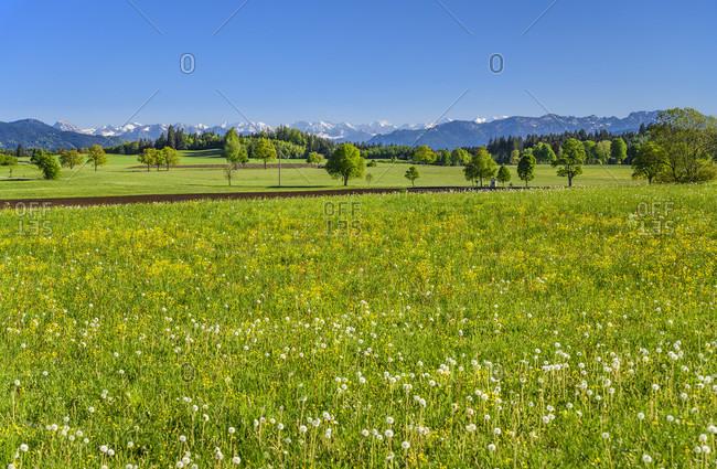 Germany, bavaria, upper bavaria, tiler land, dietramszell, lochen district, spring landscape against alpine chain