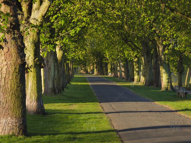 Europe, germany, hesse, giessener land, city of giessen, chestnuts in the eichgartenallee