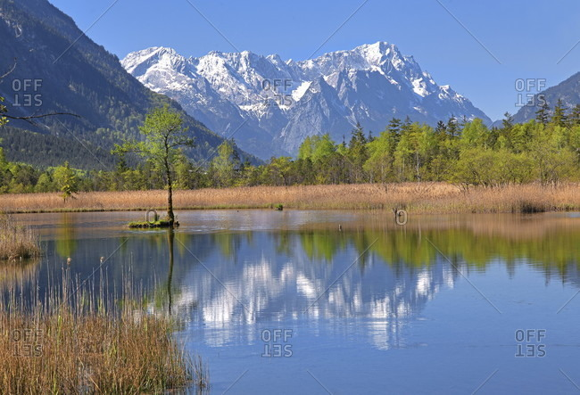 Moor area seven sources against zugspitzgruppe (2962m) in the wetterstein mountains, eschenlohe, loisachtal, das blaue land, upper bavaria, bavaria, germany