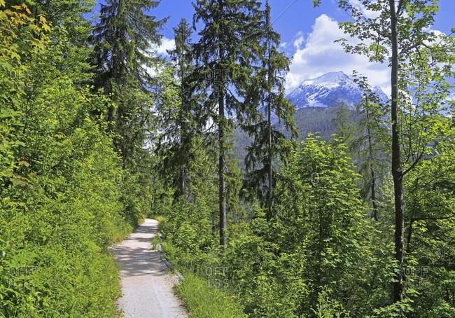 Brine pipeline route against the watzmann (2713m), ramsau bei berchtesgaden, berchtesgadener land, upper bavaria, bavaria, germany