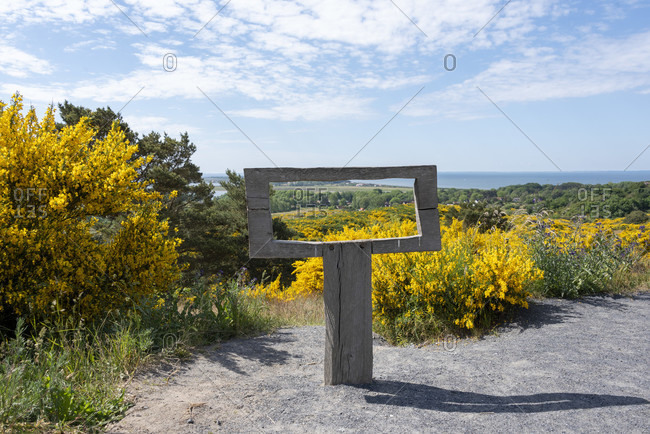 June 7, 2020: Germany, mecklenburg-west pomerania, hiddensee, view over the island on which the yellow gorse blooms once a year.