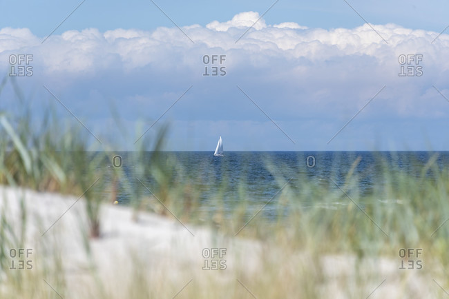 Sailboat and beach grass in the Baltic sea