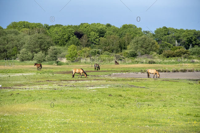 Horses and carriage on hiddensee