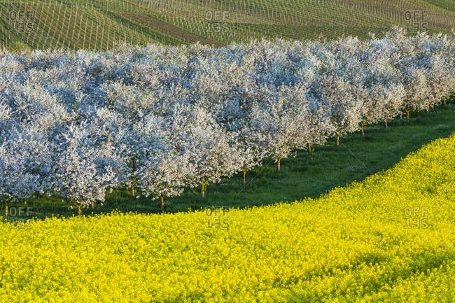 Beautiful shot of landscape in full bloom