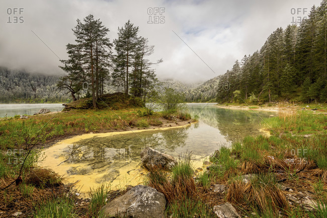 Spring at the eibsee below the zugspitze. yellow pollen drifts in the water and turns it yellow, in the background a small peninsula with trees, the overcast sky makes the colors glow and fresh snow lies on the forest in the background.