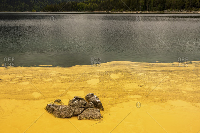 Pollen from spruces turns the banks of the eibsee at the zugspitze yellow, as if someone had poured buckets of paint into the beautiful natural lake. individual rocks protrude from it.