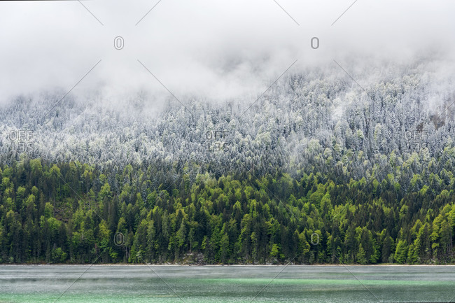 Shore of the eibsee during the eisheiligen. turquoise blue water, green forest, fresh snow and thick clouds divide this picture into four areas.