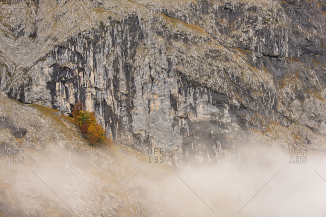 Fog on a rock face in the karwendel, below the gamsjoch in the rebuttal / engtal. a few colorful maple trees huddle against the wall.