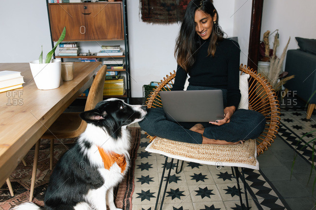 Delighted Indian female freelancer sitting on chair and working remotely from home with obedient Border Collie dog sitting nearby