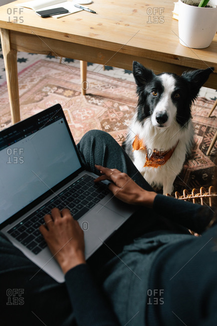 From above of crop blurred female freelancer working on laptop in room with adorable Border Collie dog relaxing on carpet
