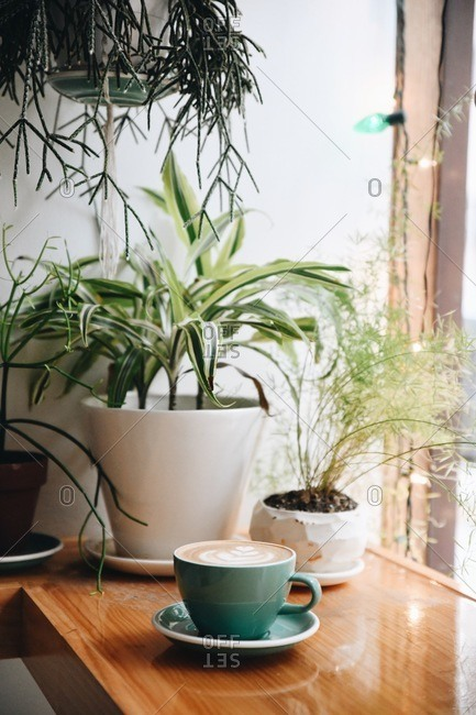 Latte beside plants on a wooden bar at a cafe in Kansas City, Missouri