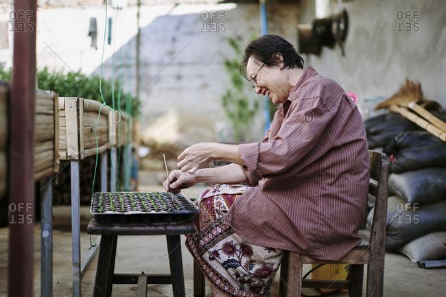 Luang Prabang, Laos - December 19, 2020: A woman plants small microgreens at an organic farm