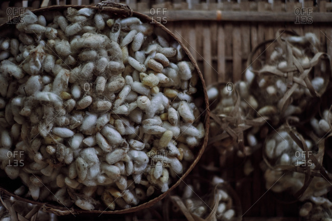 Silk cocoons displayed in rattan baskets at Mekong Villas in Luang Prabang, Laos