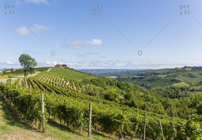 Vineyards near Treiso village, Italy