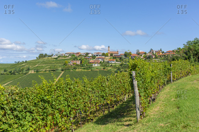 View towards the village of Treiso with its vineyards