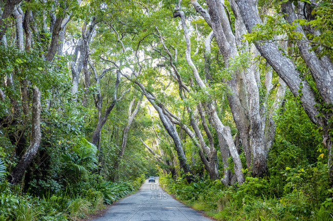 Cherry Tree Hill, a scenic route that crosses the avenue of mahogany trees belonging to the historic St. Nicolas Abbey.