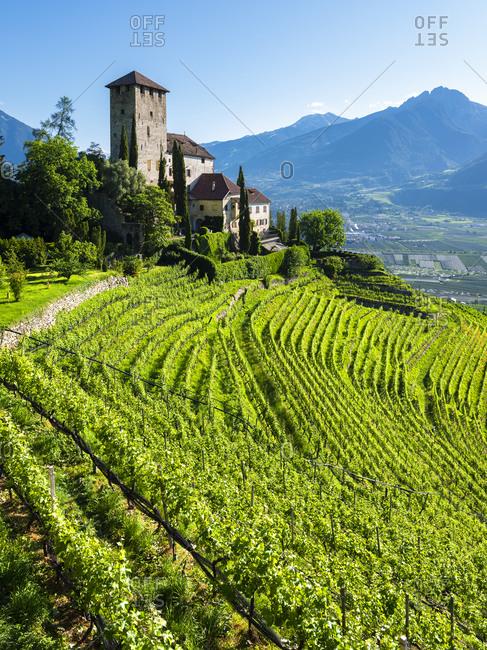 Lebenberg Castle nestled in the vineyards