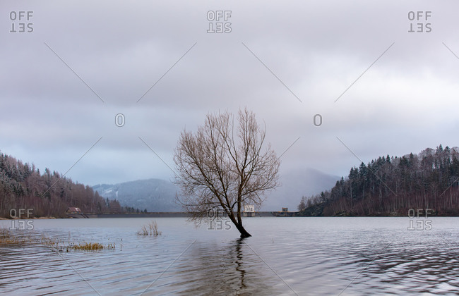 Lonely tree in a lake in mountains of sudetes, poland