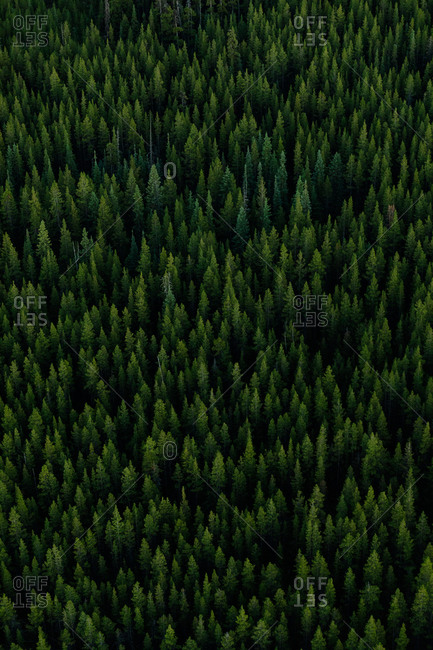 Aerial view of a lush forest