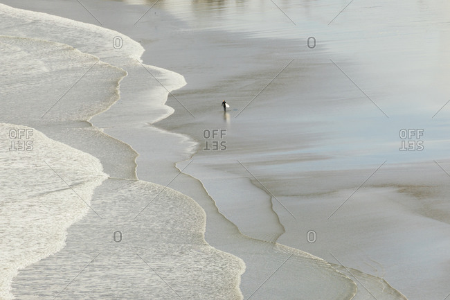 Surfer isolated on a beach with waves