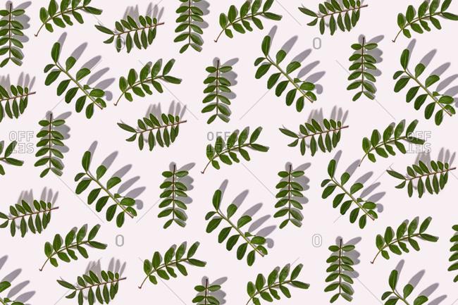 Green leaves on white background- illustration