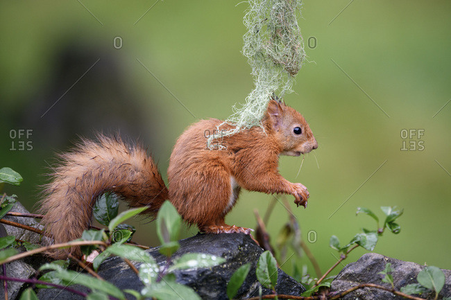 Close-up of squirrel standing on rock