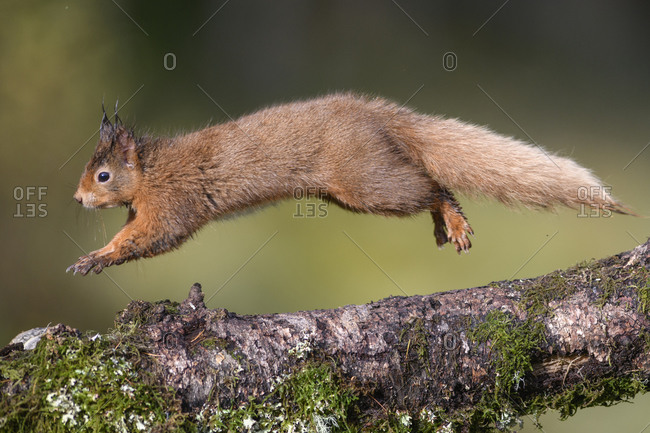 View of squirrel jumping on branch