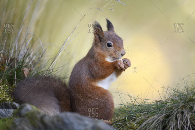 Close-up of red squirrel standing on plant