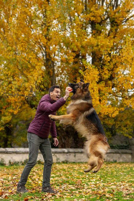 Dog jumping and catching ball in man hand while playing at park